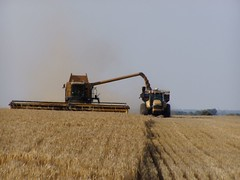 Harvest Time   by AdaMacey