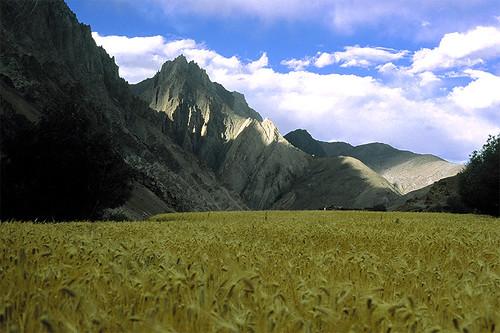 Himalaya, Ladahk