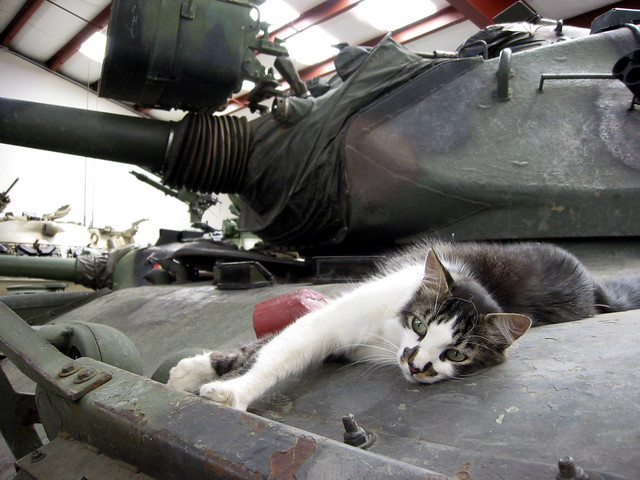 Awesome Tank Cat This Cat Seemed Right At Home On This Tank Download Free Architecture Designs Rallybritishbridgeorg