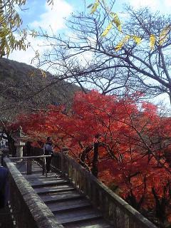 japanese maples at kiyomizudera