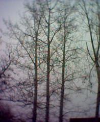 Grey foggy day