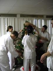 Karateka put up the tree
