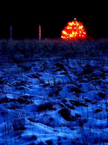 Lighted Tree in Snowy Field