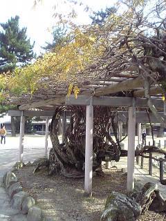 cool twisty trunk tree