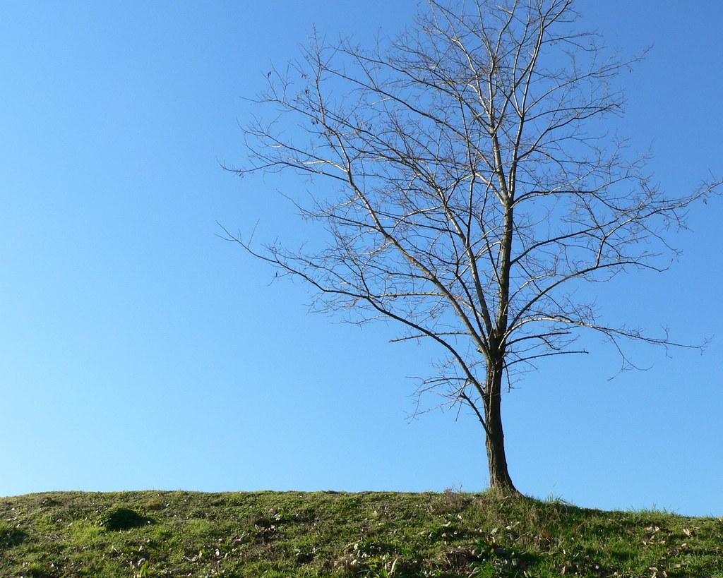 albero su sfondo blu