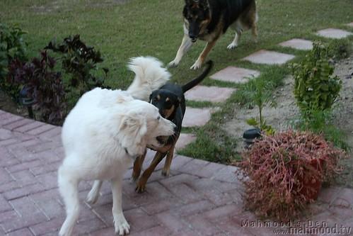 3 Stupid Dogs