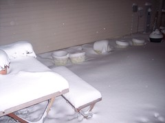Evening Snow in the Backyard