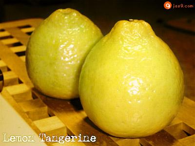 Lemon Tangerine
