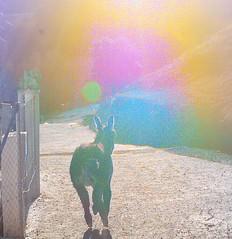 burro_corriendo
