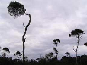 savanna on St.Margueritte Island