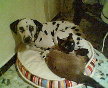 Lili & Kiwee