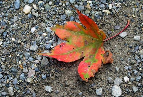 Leaf on the path