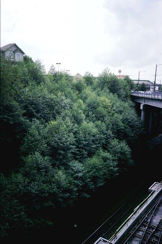 Grandview Cut slope after restoration | by oliverk