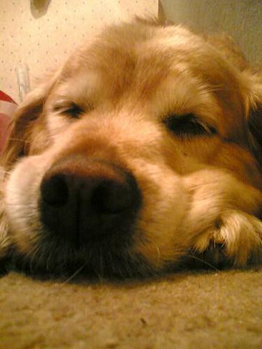 Snout!