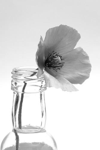 an injured flower