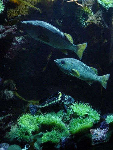 westcoastfish