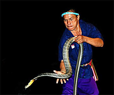 Snake-Fighter