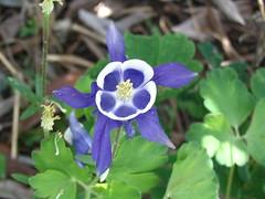 Linda Moncur Florals 2