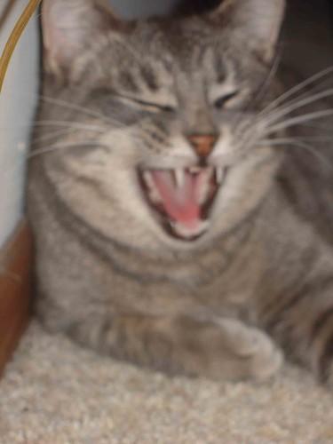 smoke yawn