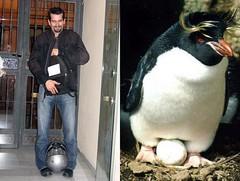 pingüino y Arkangel