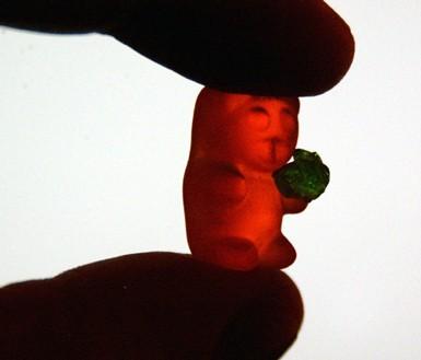 gummy eating gummy. yum!