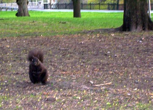 Evil squirrel