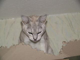 bada ning! diet of cardboard (4 of 4) | by outersquid