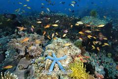 Recife de coral, Filipinas