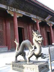 beijing dragao