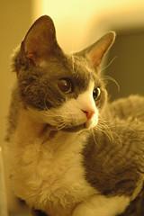 Milo strikes a pose
