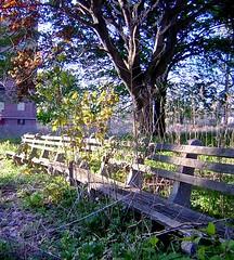 BMHA's Park Bench