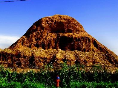 sawdust mound-tld
