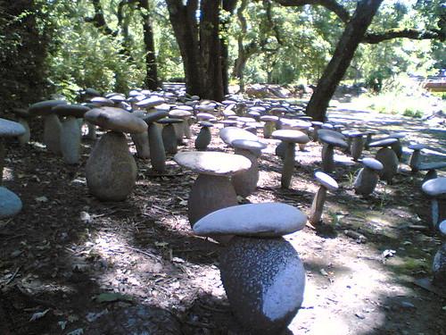 """""""Mushroom"""" Garden"""
