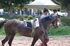 cheval baccouri