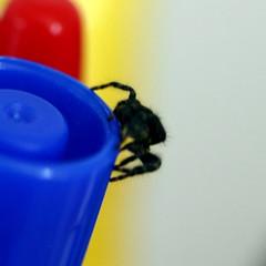 Spider on marker 2