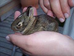 Baby Bunny in Laura's Hand