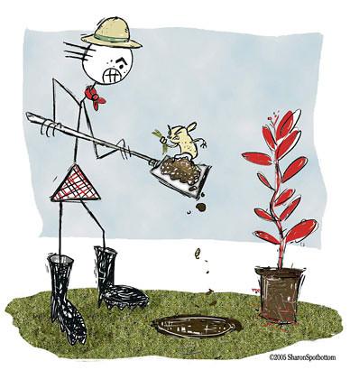 gardening-sharon-