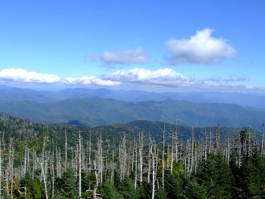 View from Clingmans Dome observation tower