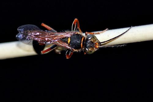 Wasp #3