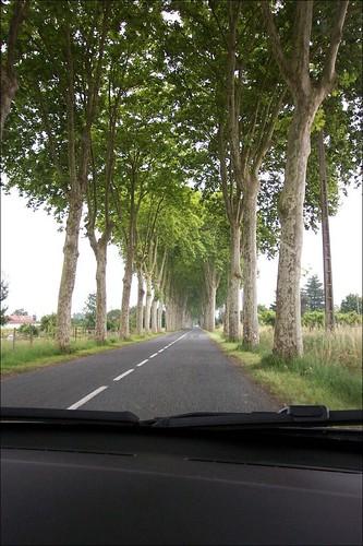 Canal du Midi roads Plane Trees