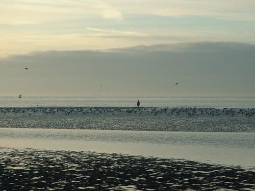 Crosby Beach (02/01/2006)