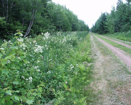 Cardigan to Georgetown and Montague on Confederation Trail | by Buddha Dog