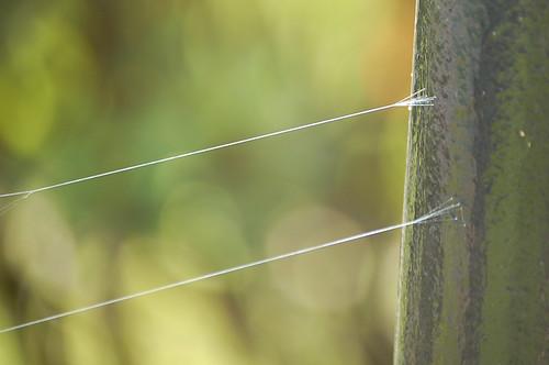nature spider spiderweb foundation connection cwd1801