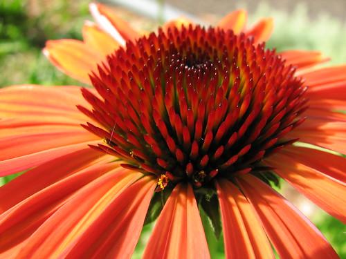 flowers ohio medina