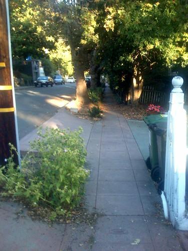 Pretty sidewalk scene | by scriptingnews