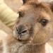 Australia / Adelaide, Kangaroo Island