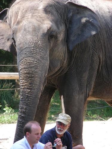 Elephant   by robinpresta