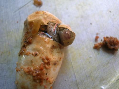 snake egg hatching