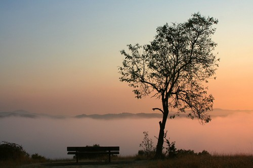 sky tree silhouette sunrise ebrpd fairmontridge