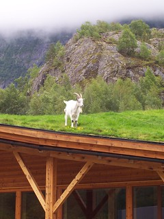 Goat on the roof | by Bods